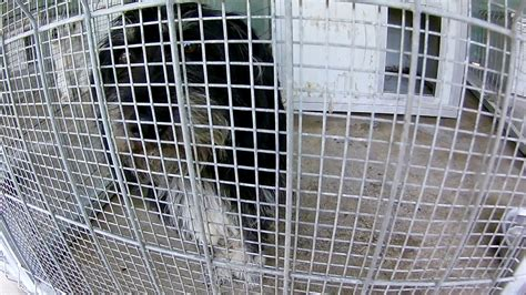 Buster and Pumukli in the quarantin ekennels - YouTube