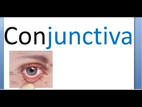 Conjunctivitis in Dogs: Symptoms, Causes & Treatments