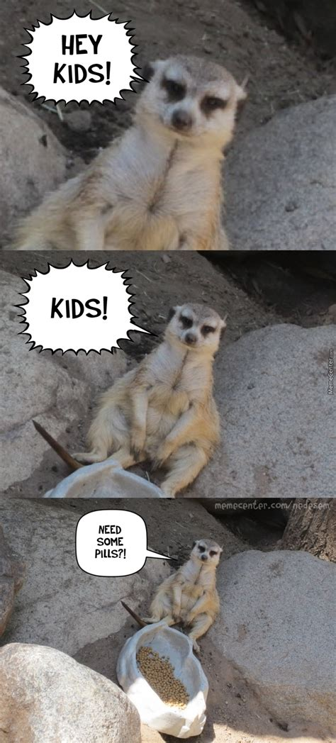 19 Hilarious Mongoose Meme That You Never Seen Before